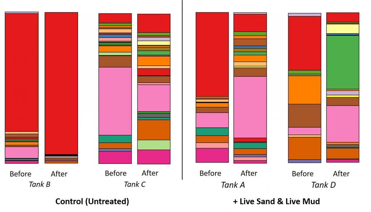 live sand effect v2.jpg