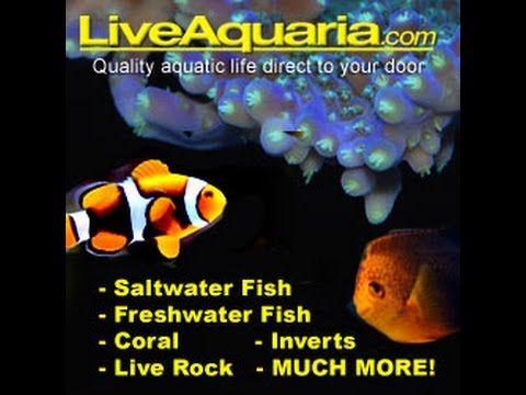 liveaquaria.jpg