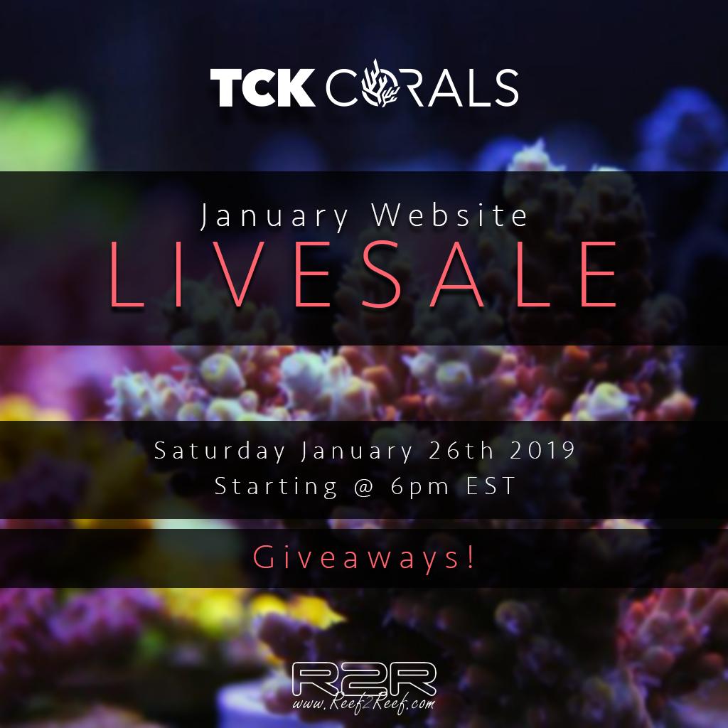 Livesale TCK.jpg