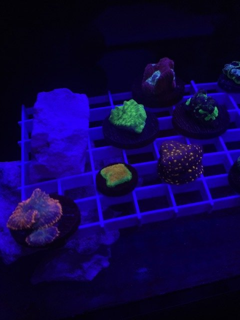LRO Live Spring Sale - Corals 1 - 3.10.21.jpg