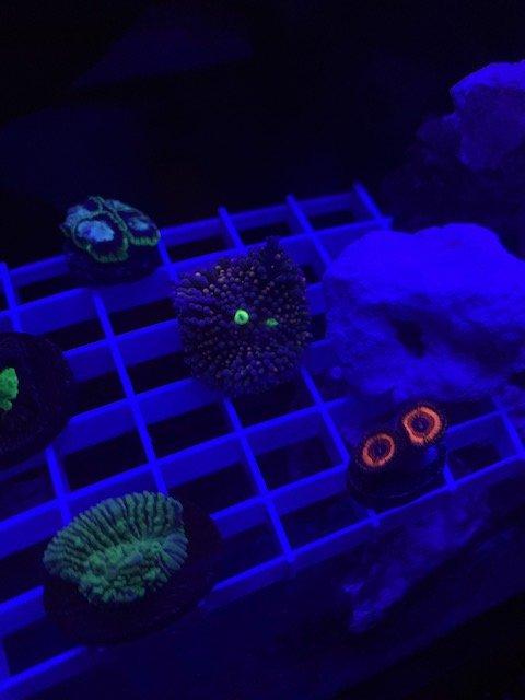 LRO Live Spring Sale - Corals 2 - 3.10.21.jpg