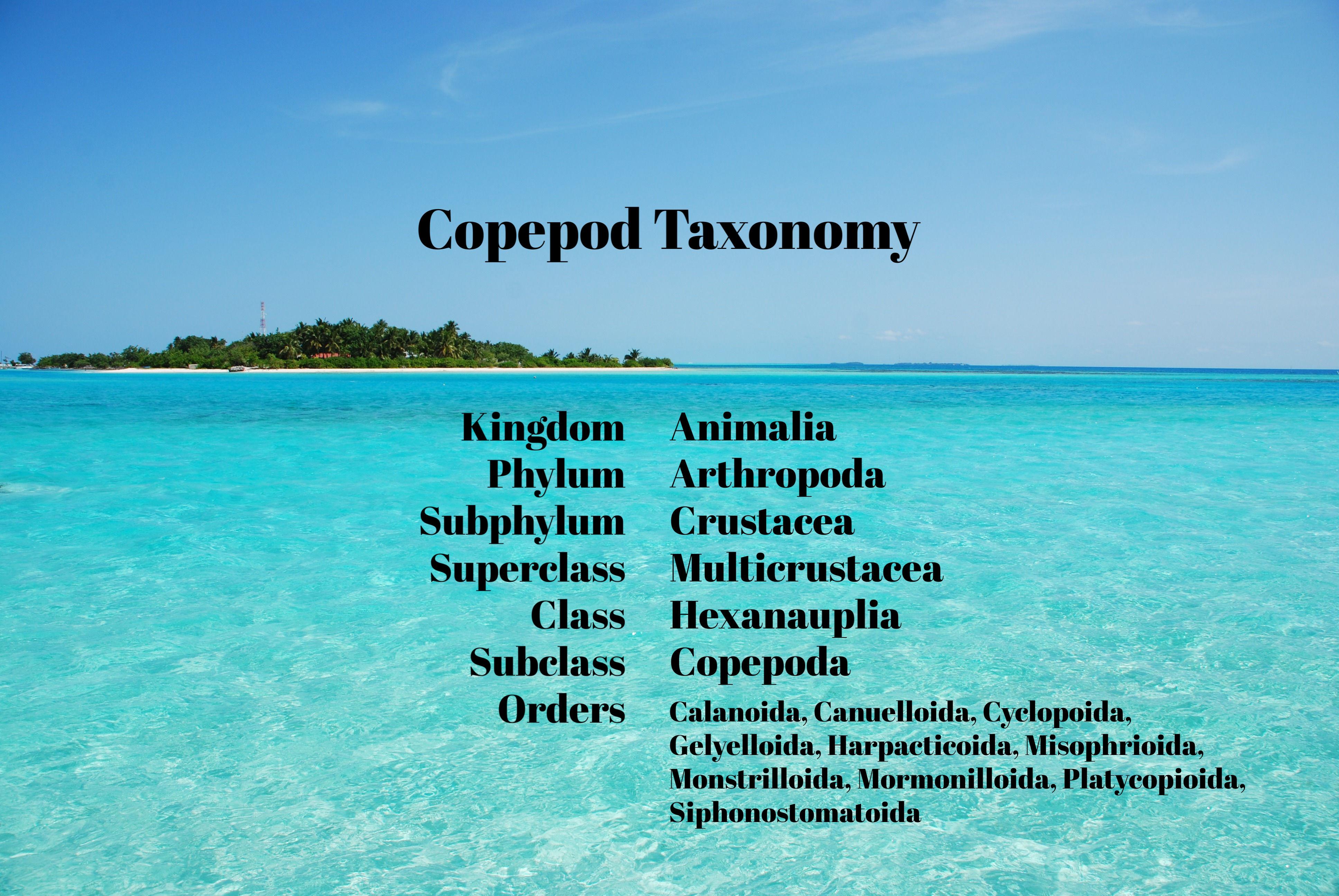 maldives-island-with-gorgeous-turquoise-water_7kIyX4 (1).jpg