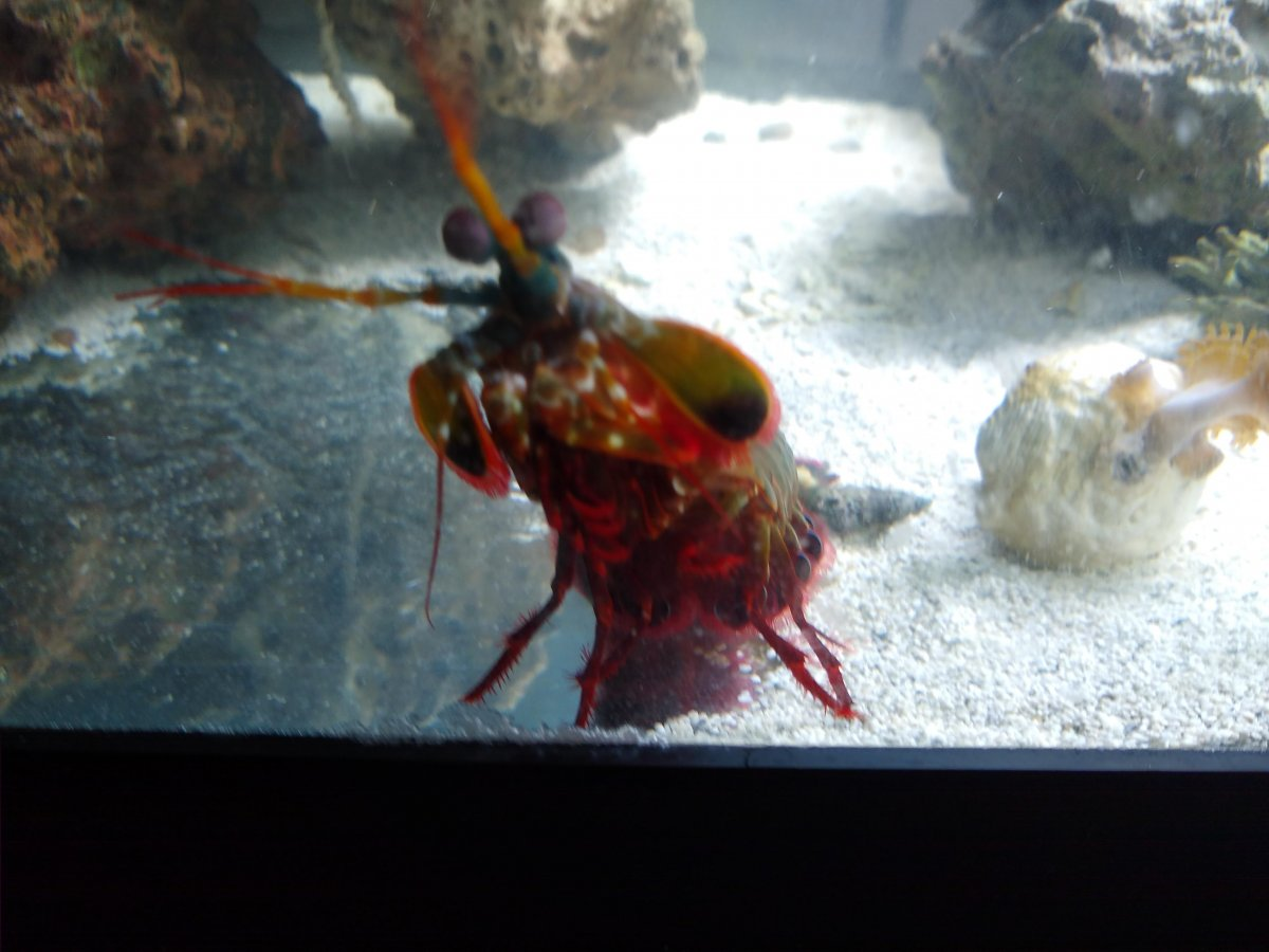 Mantis 4.jpg