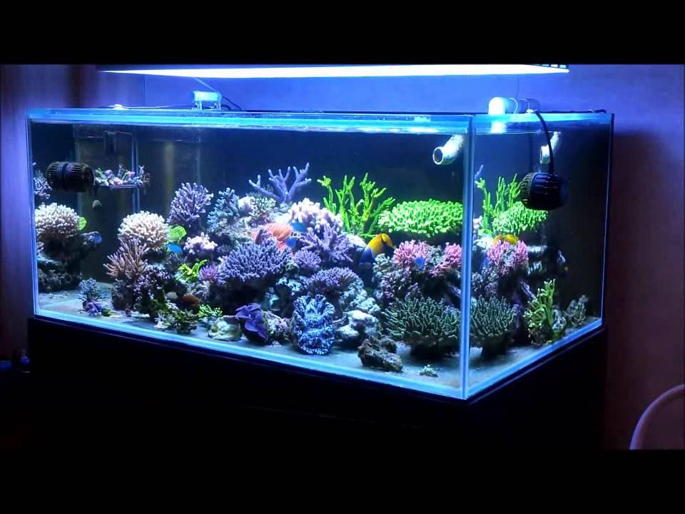 Keeping Acropora Reef2reef Saltwater And Reef
