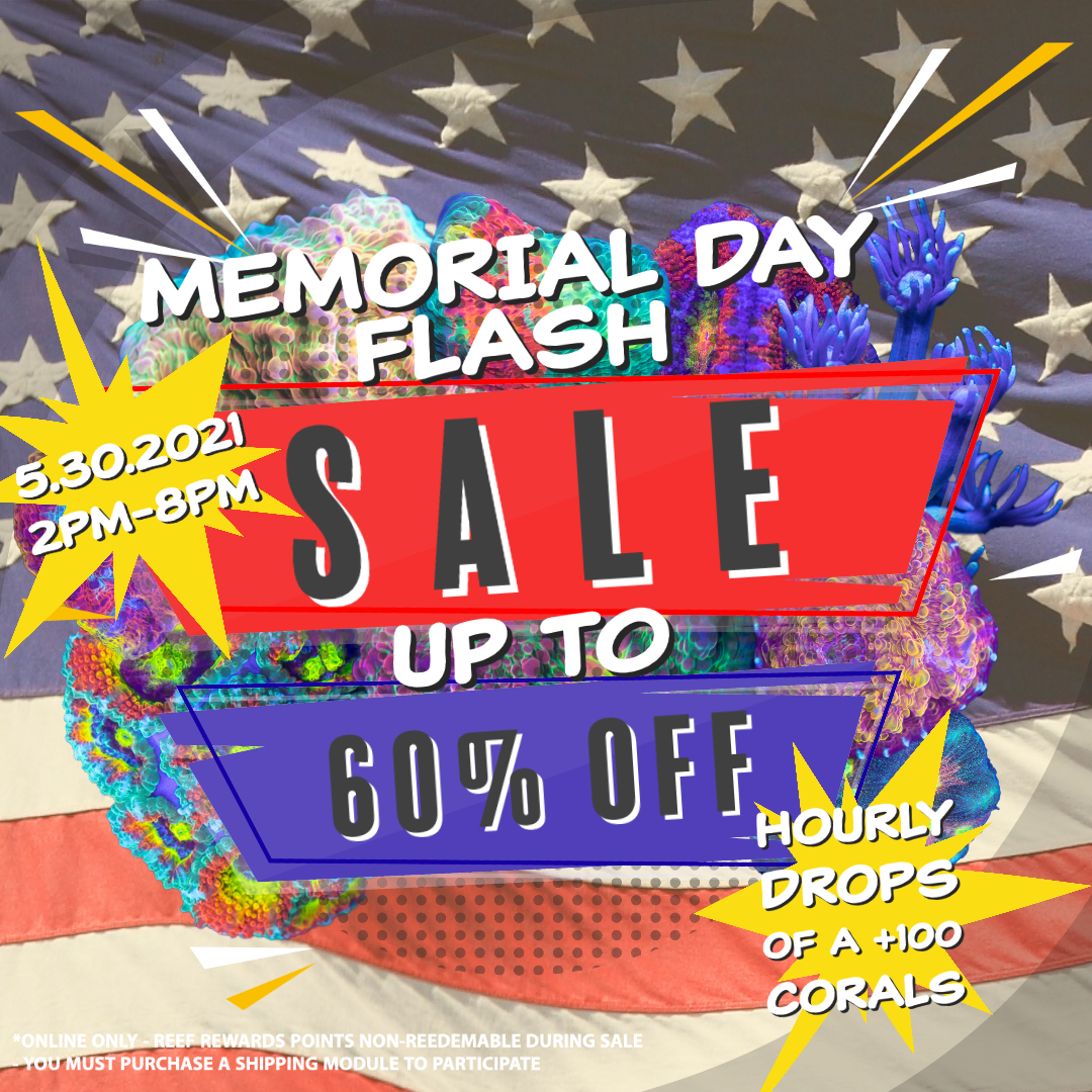 Memorial Day Flash Sale.jpeg