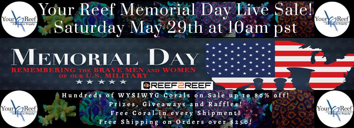 Memorial day sale large.jpg