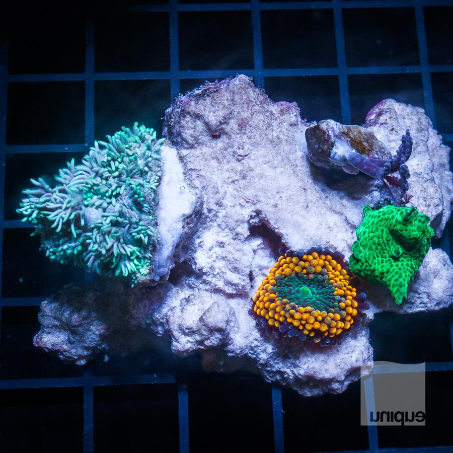 mixed rock 119 79.jpg