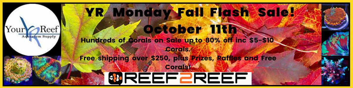 Monday Fall Flash Sale.jpg