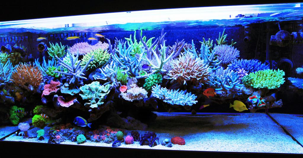 Floating Aquascape Questions Reef2reef Saltwater And Reef Aquarium Forum