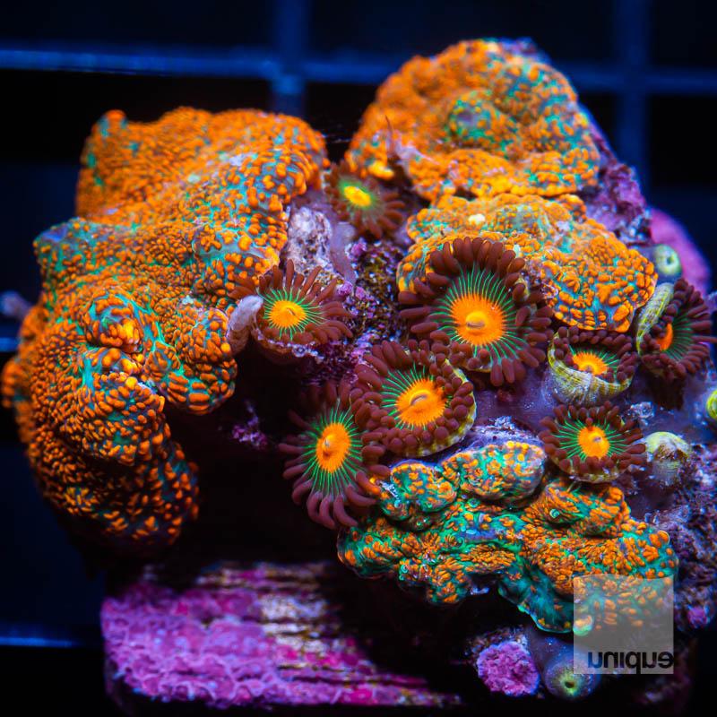 Mushroom Rock 79 49.jpg