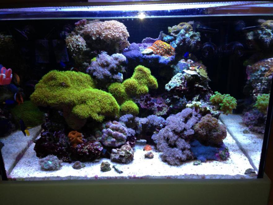 Show Off Your Large Tank Aquascape :) | Page 15 ...