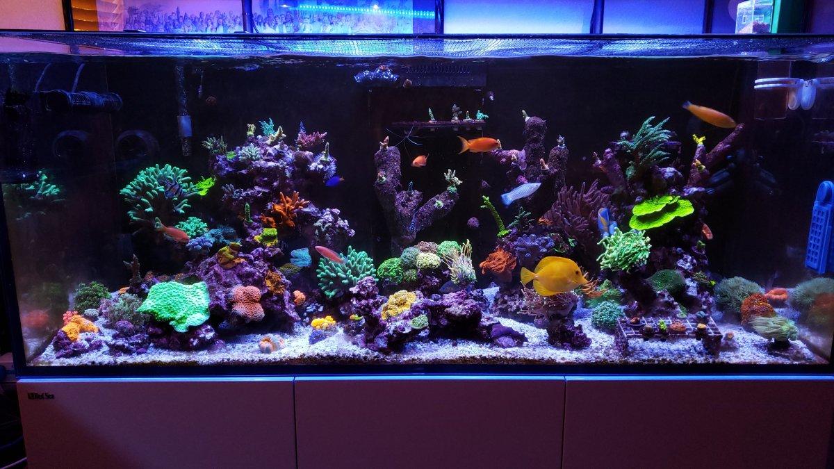My Reef Tank.jpg