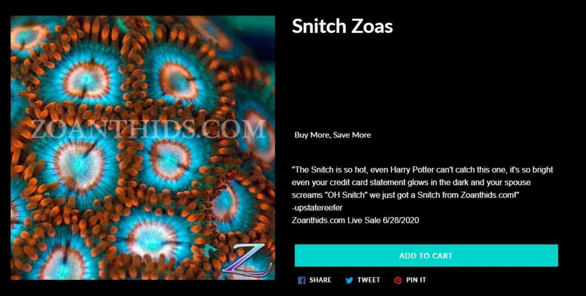 Name The Zoa-No Price.jpg