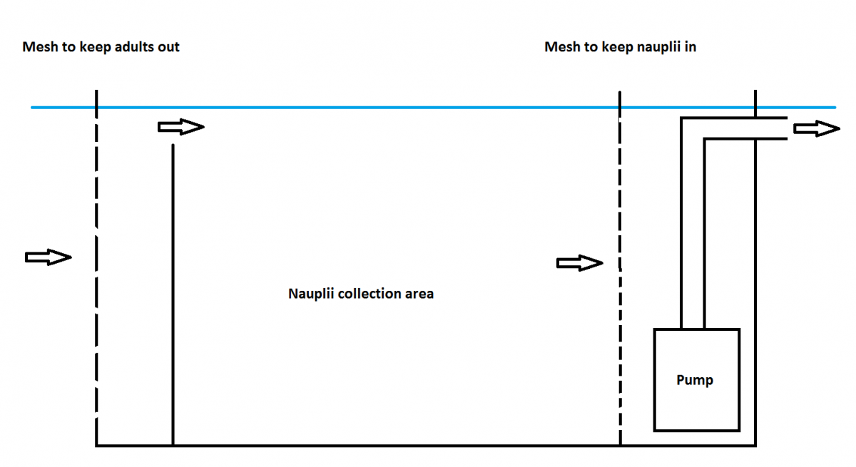 Nauplii collection box.png