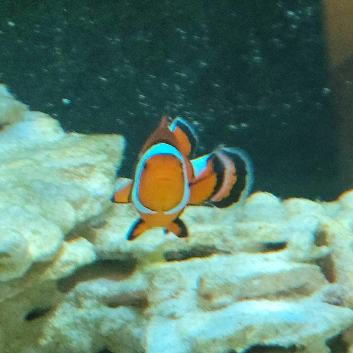 Nemo 2.jpg