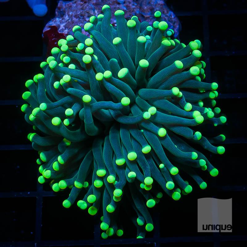 Neon Tip Torch 279 199.jpg