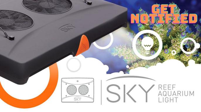 Neptune-Sky.jpg