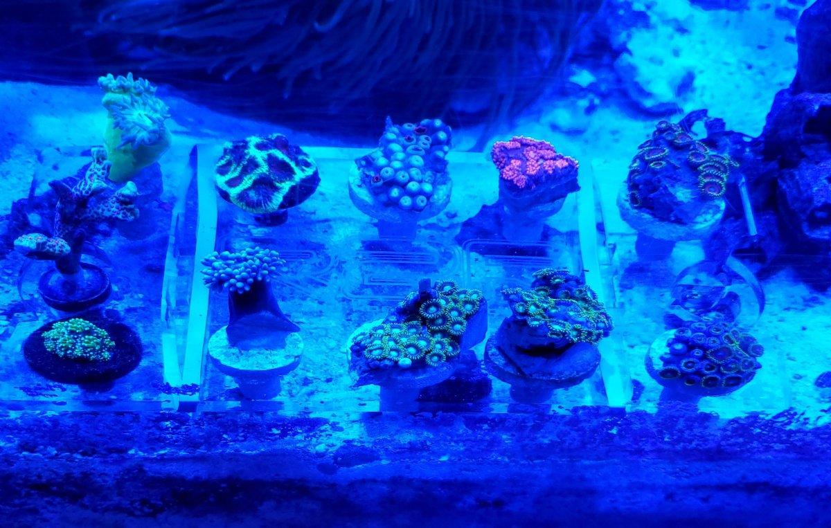 New Corals 1.jpg