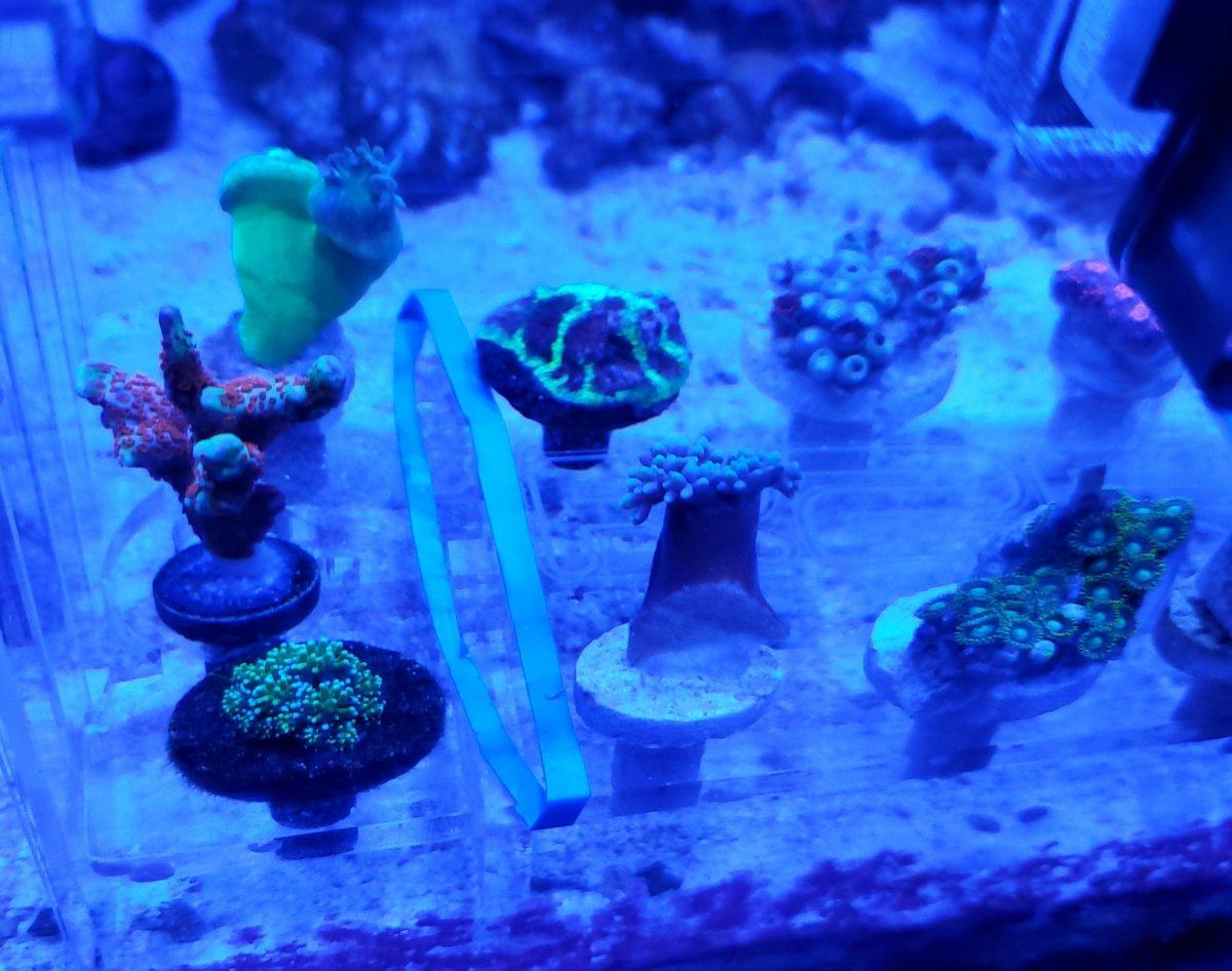 New Corals 2.jpg