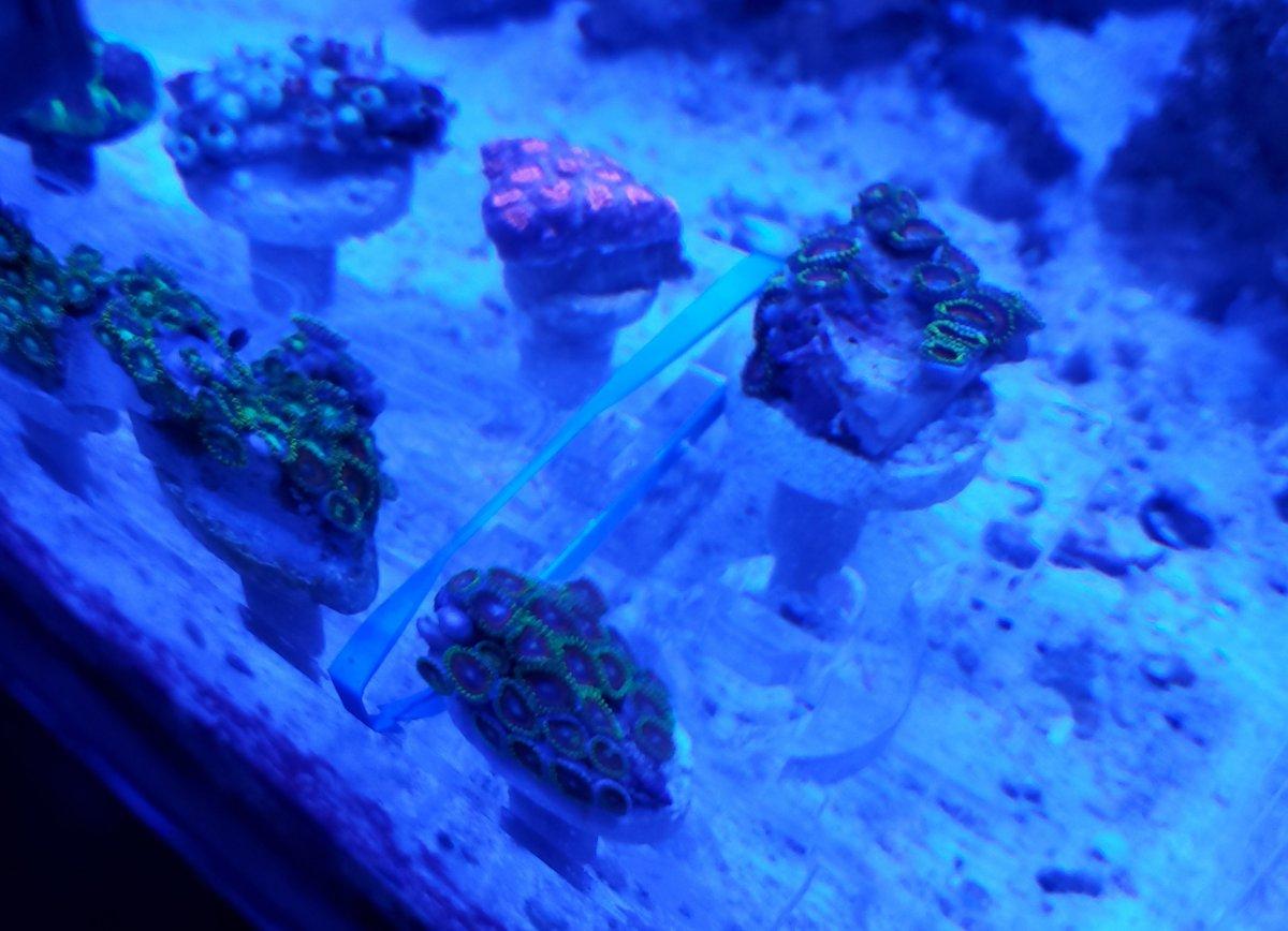 New Corals 3.jpg