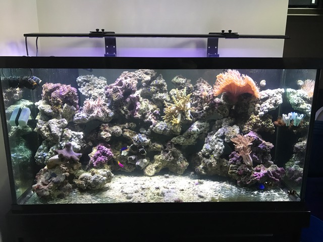 Led Lighting For A 120 Gallon Reef Tank Reef2reef