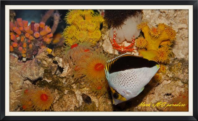 niceshotfishinvert.jpg