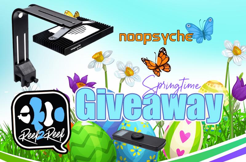 Noopsyche Giveaway Spring.jpeg