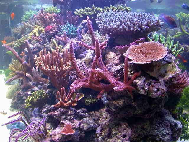 North Star Corals 109.jpg
