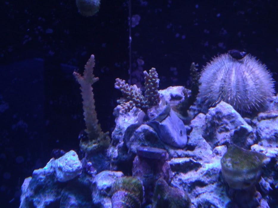 十一月天Coral.jpg