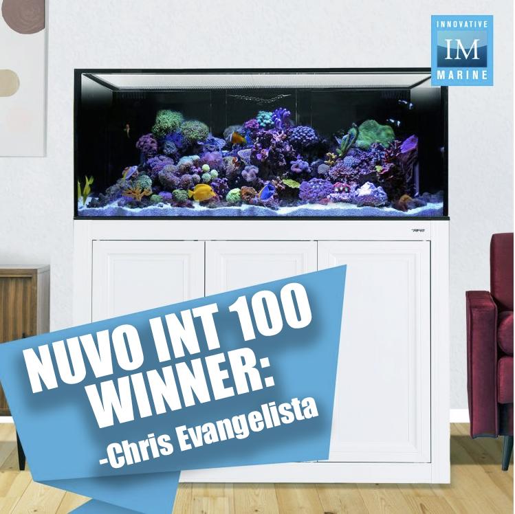 NUVO INT 100 Winner.jpg