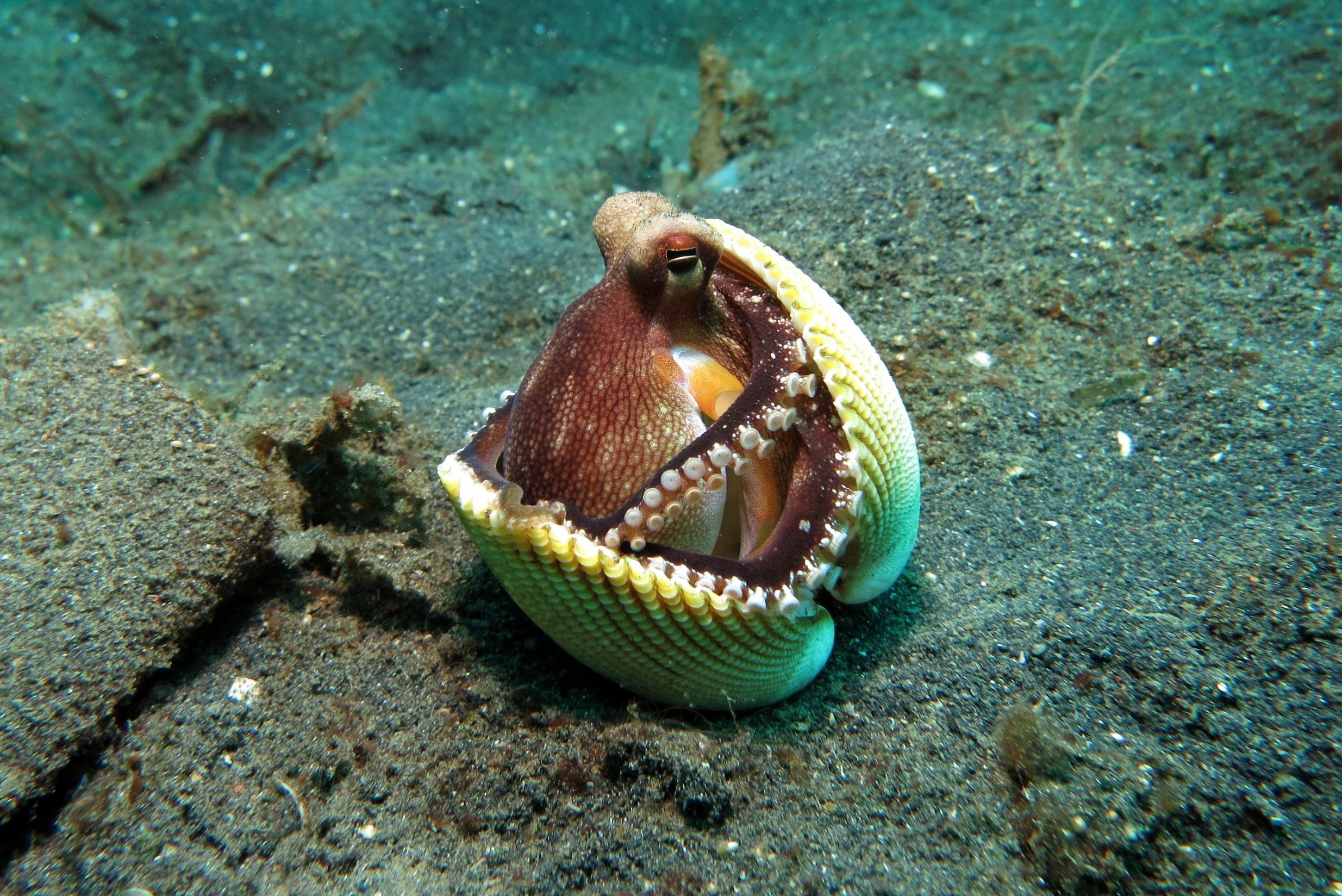 octopus-1144665.jpg