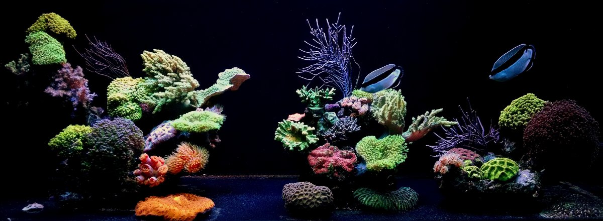 December discount thread your fish will think we 39 re santa for Discount aquarium fish and reef