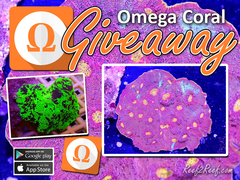 Omega Coral Contest.jpg