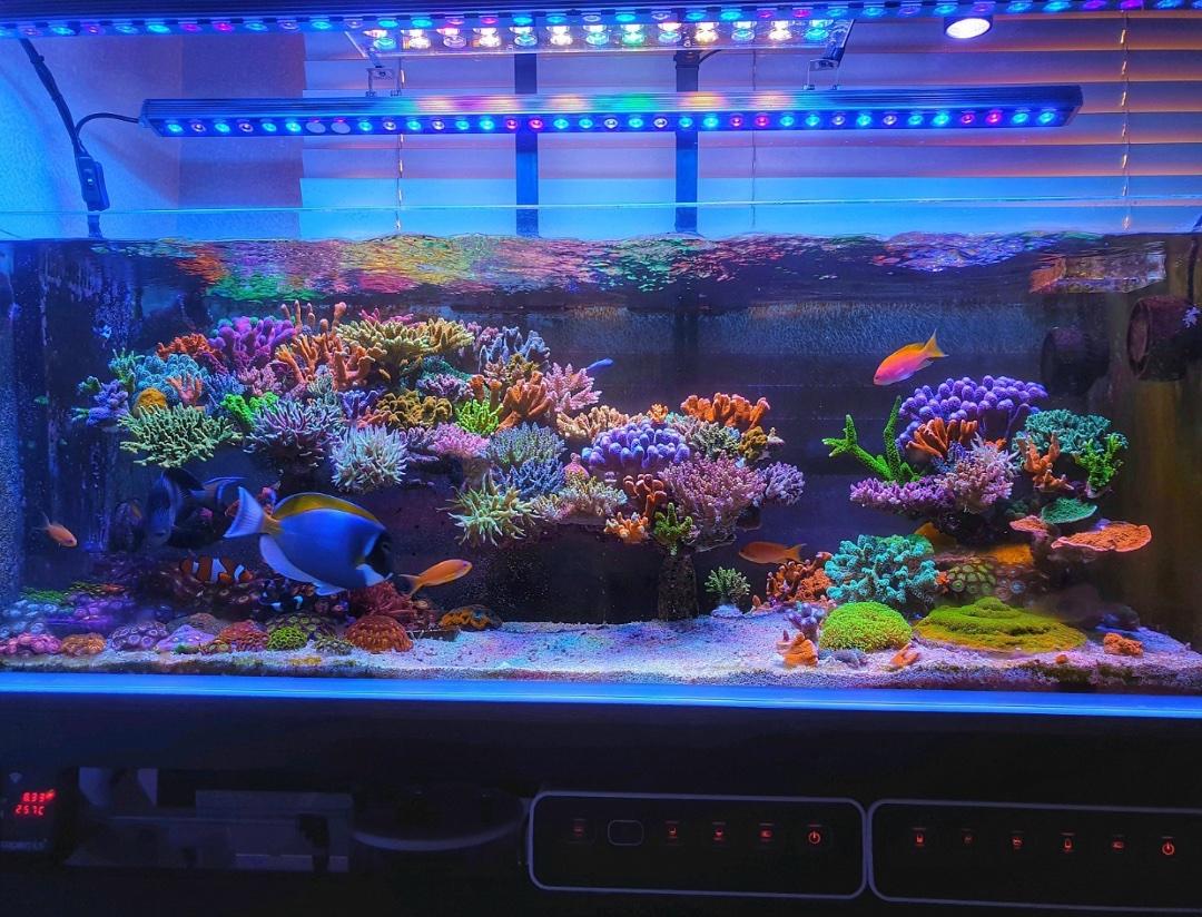 OR3_LED_Bars_reef_tank.jpg