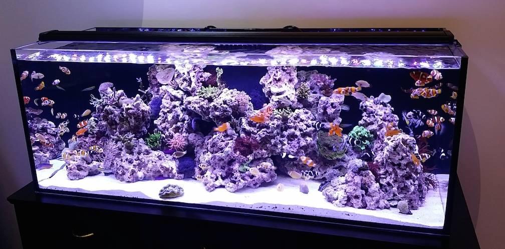 Orbit Marine Pro In Stock Reef2reef Saltwater And