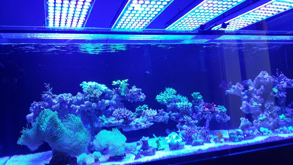 Orphek-Atlantik-v4 -reef-aquarium-LED-lighting.jpg