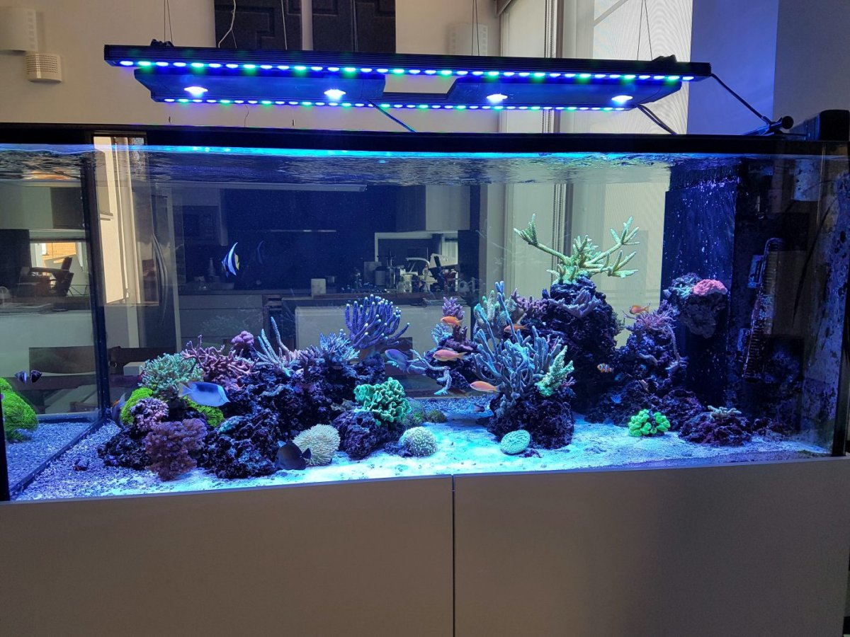 Orphek-Bar-Aquarium-LED-lighting-1413x1060.jpg