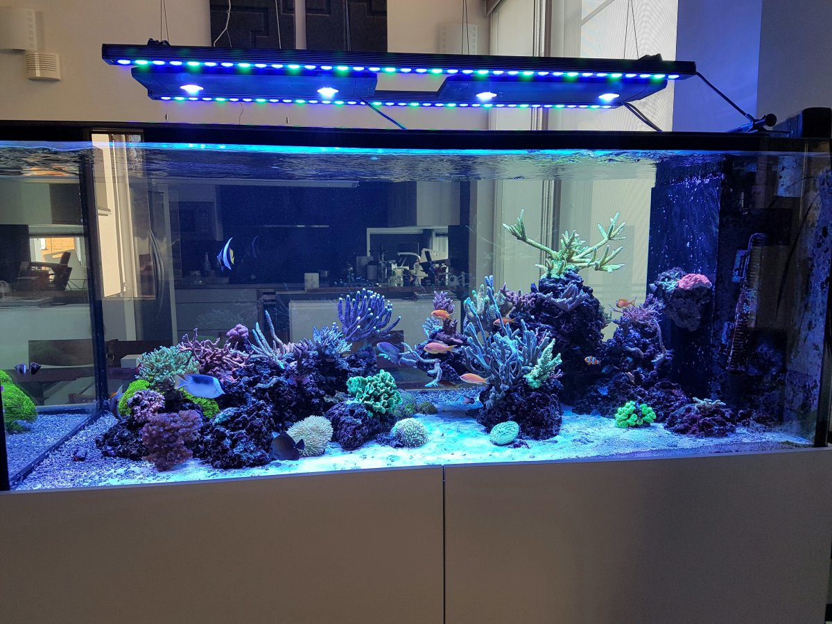 Orphek-Bar-Aquarium-LED-lighting.jpg
