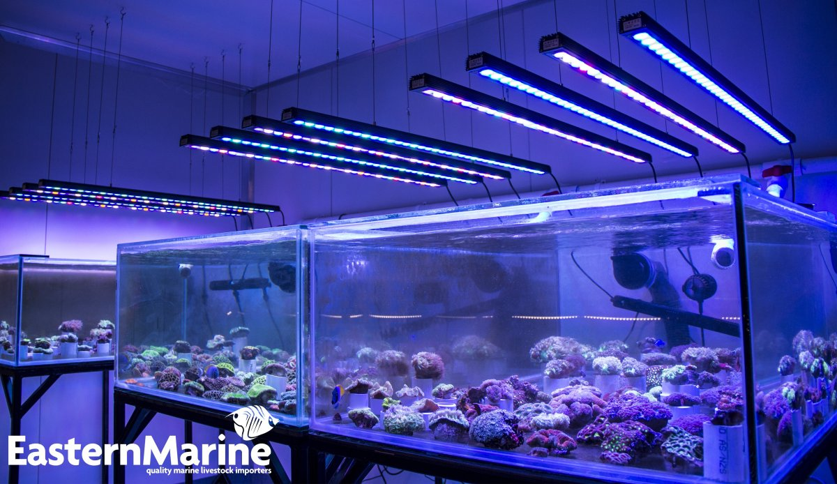 Orphek OR 120 Bar LED Aquarium Lighting.jpg