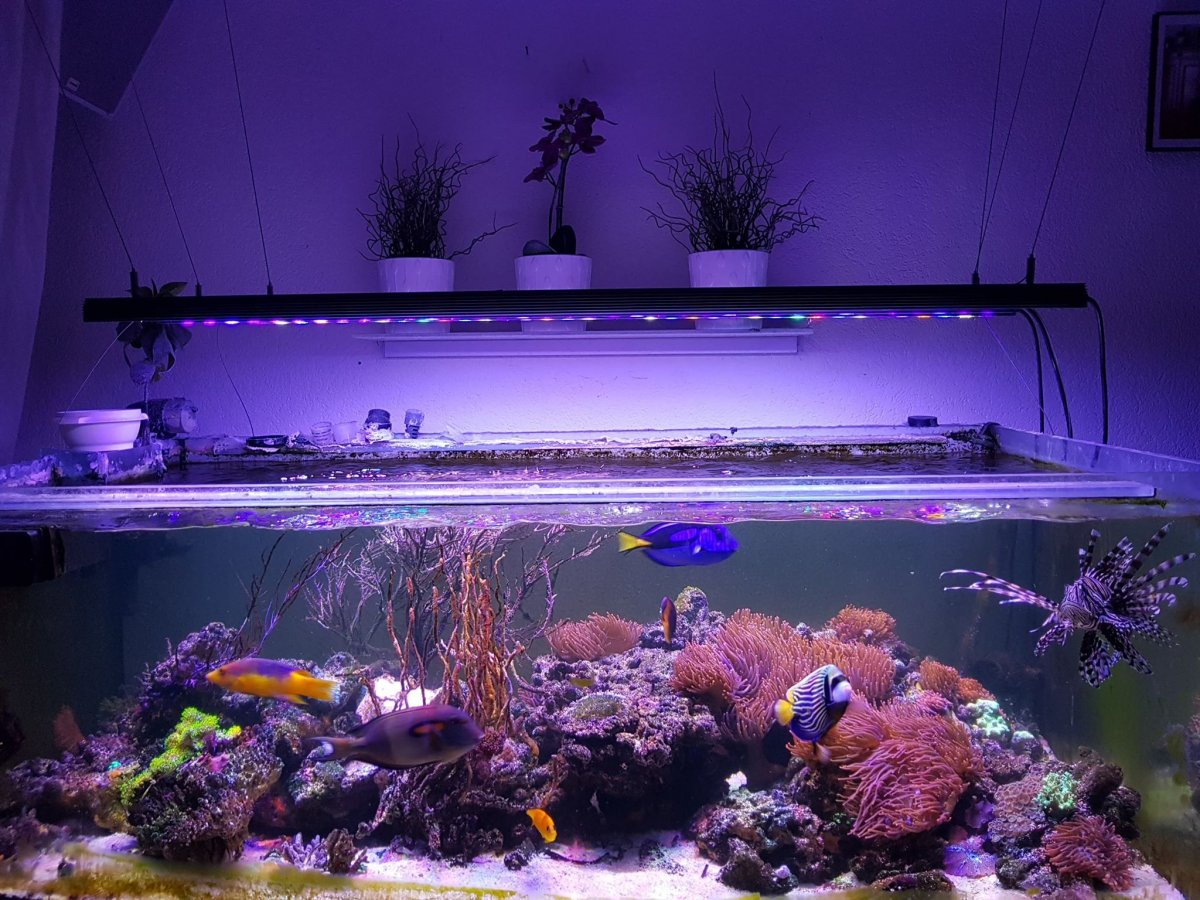 Orphek_OR120_Bat_LED_aquarium_light.jpg