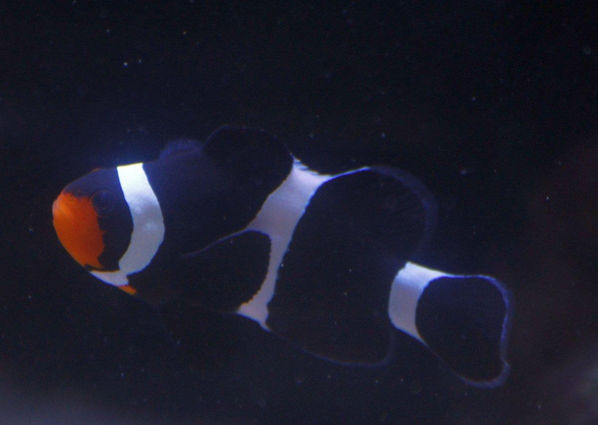 ourmrclownfish-10-12-2018.jpg