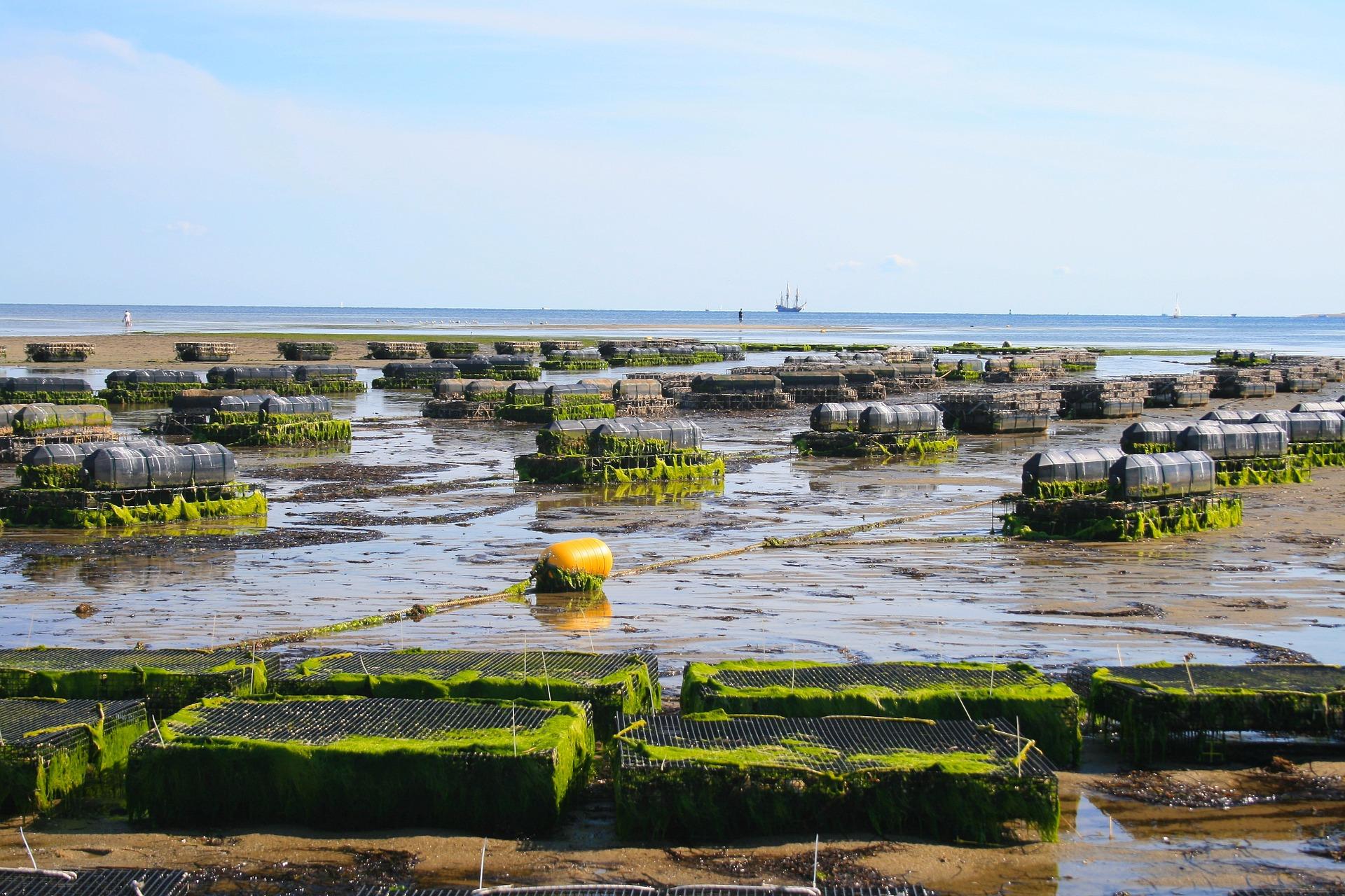 oyster-farm-1404178_1920.jpg