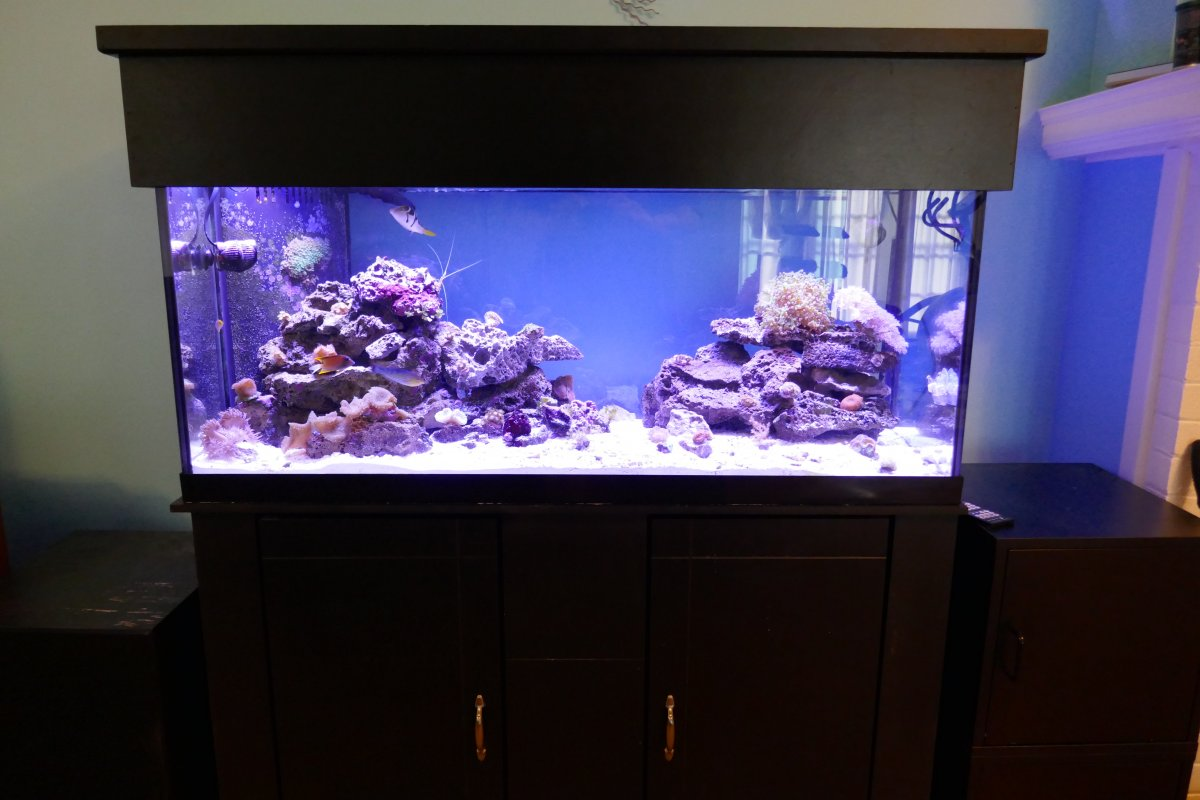 This is the present configuration 75 gallon ... & DeepBrewu0027s 75 Gallon Reef | REEF2REEF Saltwater and Reef Aquarium ...