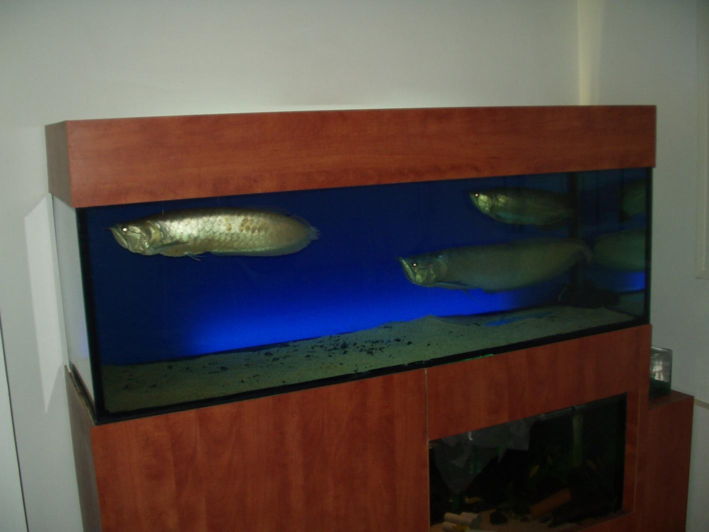 500 liter reef from israel reef2reef saltwater and reef aquarium forum. Black Bedroom Furniture Sets. Home Design Ideas