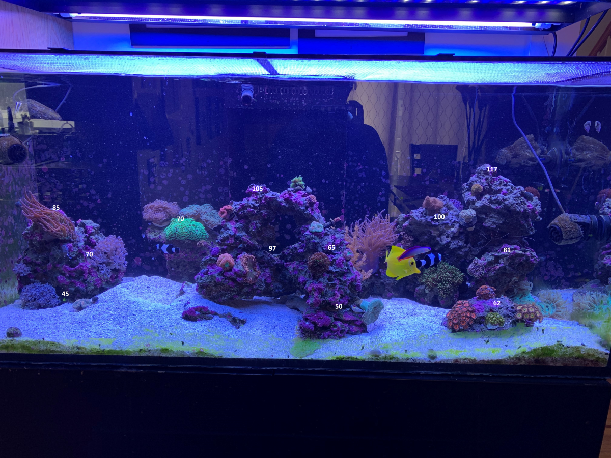 PAR LED home tank.png