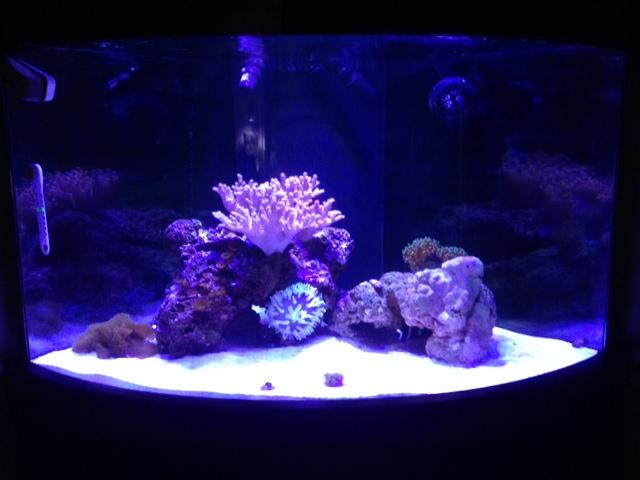 My 54 Gallon Corner Tank Reef2reef Saltwater And Reef