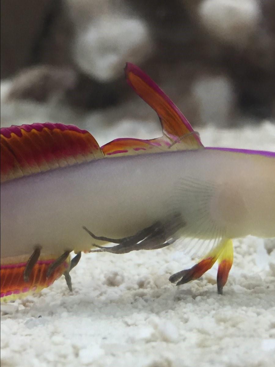 Piscicolidae Worm Alexis Terlep.jpg