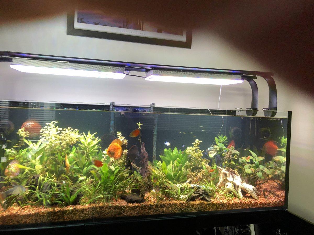 Planted -aquarium -LED lighting .jpg