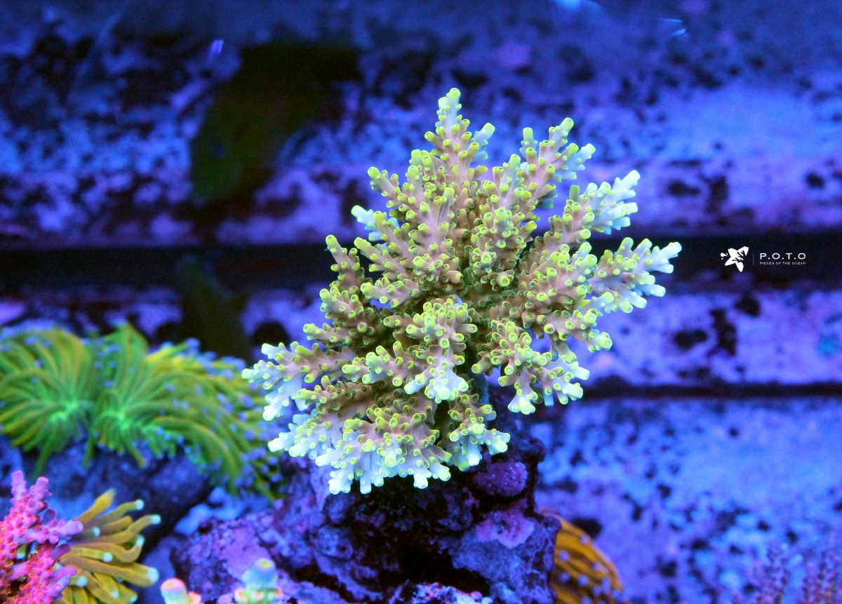 poison-ivy2.jpg