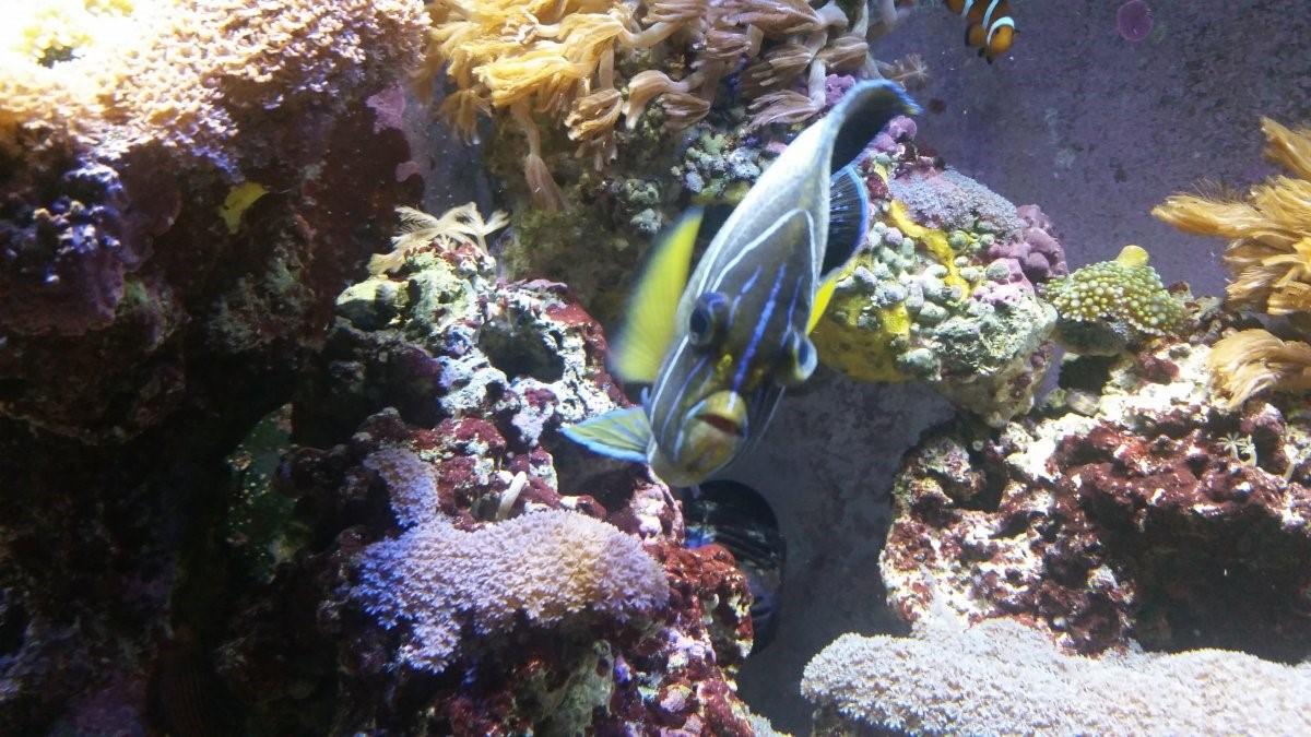 Fish Disease Index - Pictorial Guide | REEF2REEF Saltwater ...